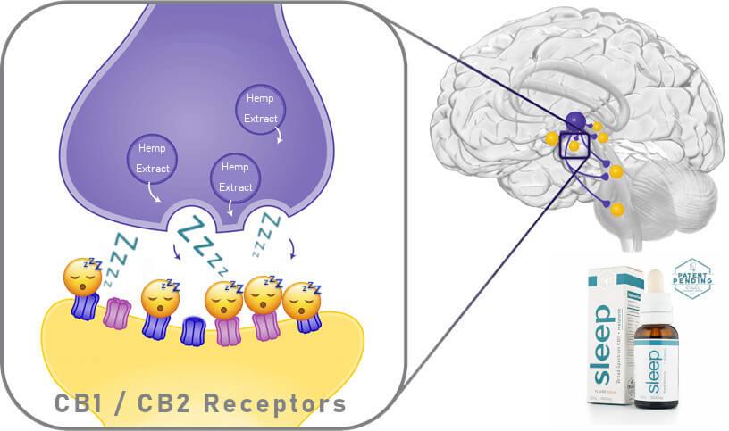 Cbd For Sleep Triggering Brain Signals