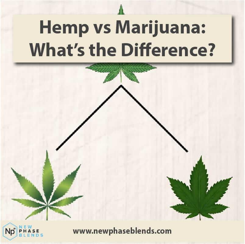Hemp Vs Marijuana Thumbnail
