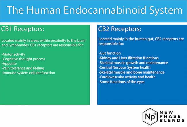 how to use CBD receptors list