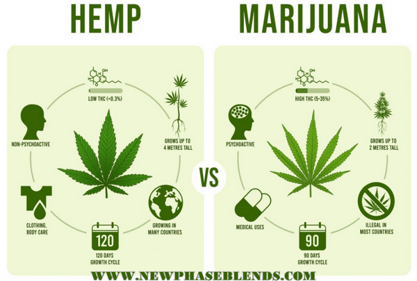marijuana vs hemp oil
