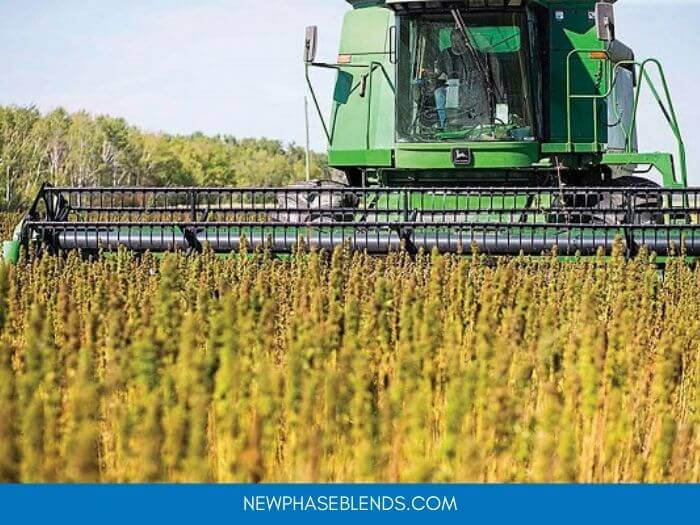 How To Plan Your Crop Rotation With Hemp