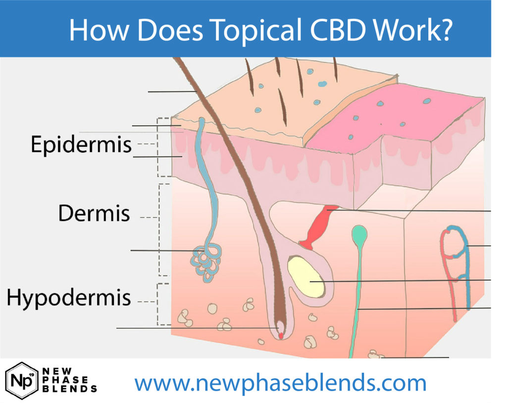 How Does Topical Cbd Work