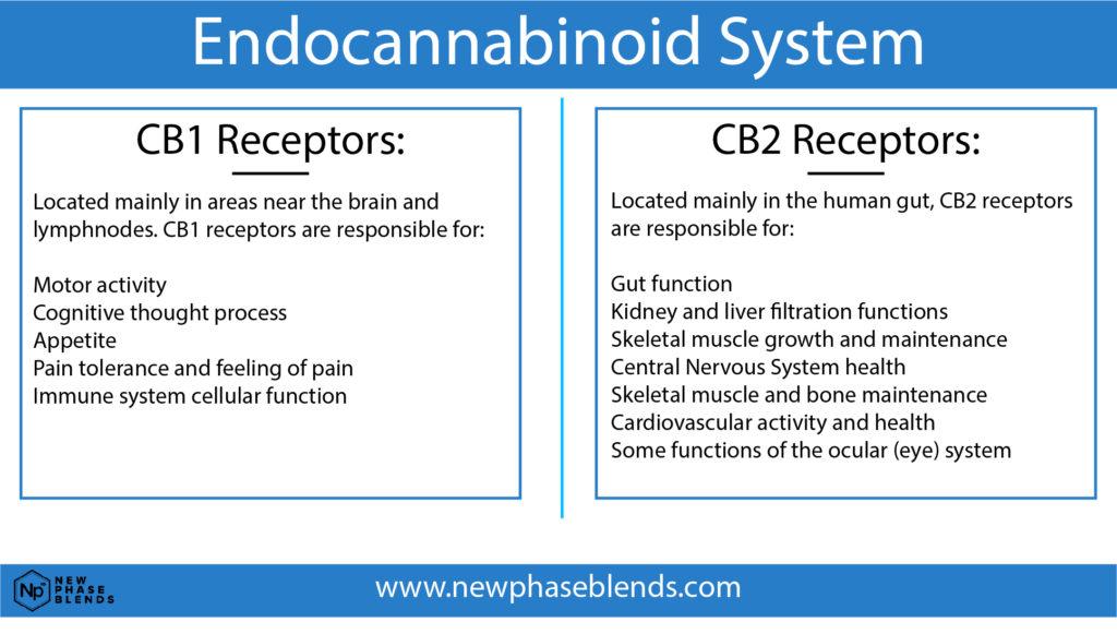CB1 and CB2 receptors chart