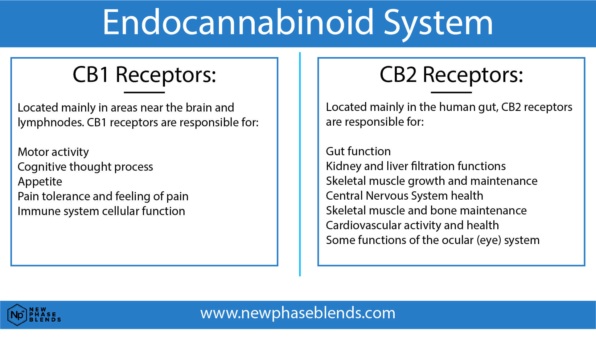What is CBD Oil Good For CB1 and CB2 receptors chart