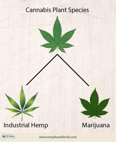 Hemp Cbd Vs Marijuana Cbd Chart