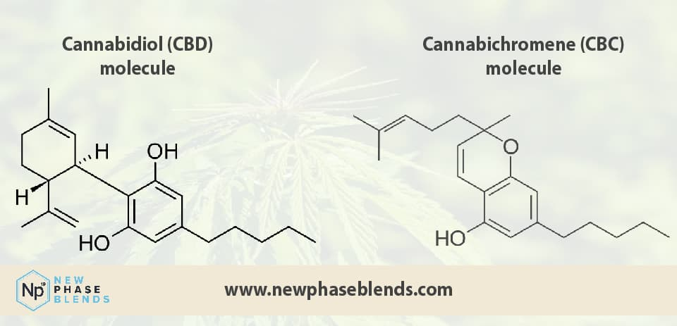 Difference between CBC vs CBD