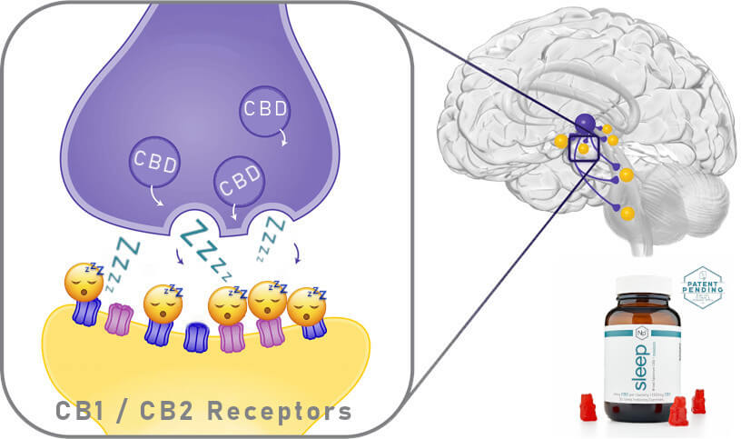 Brain Cb Receptors Image