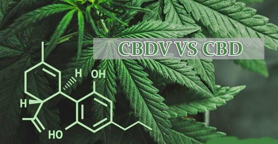 CBDV VS CBD