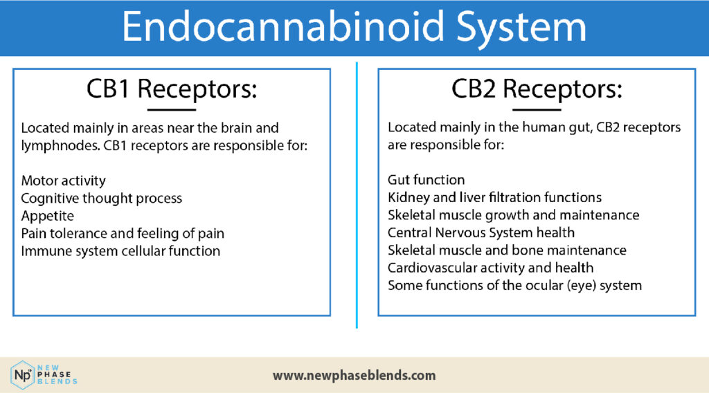 Can I Mix CBD and Painkillers