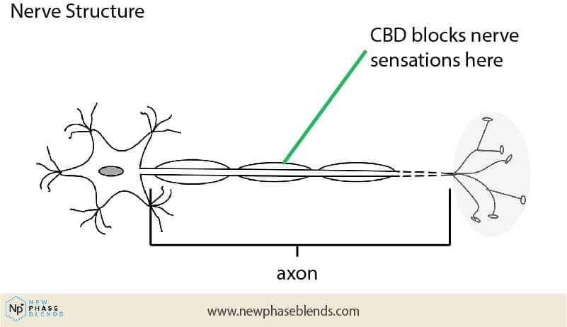 CBD balm nerve effects diagram