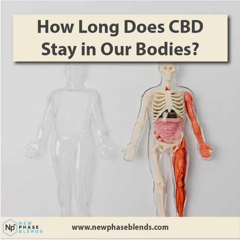 How long does CBD stay in our bodies thumbnail