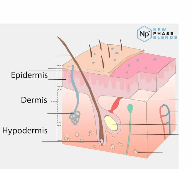 Acne Treatment Skin Layers