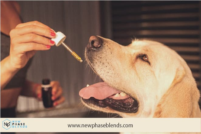 Cbd Facts For Pets