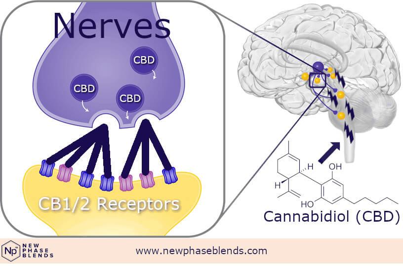 Cbd Molecule Affects Brain
