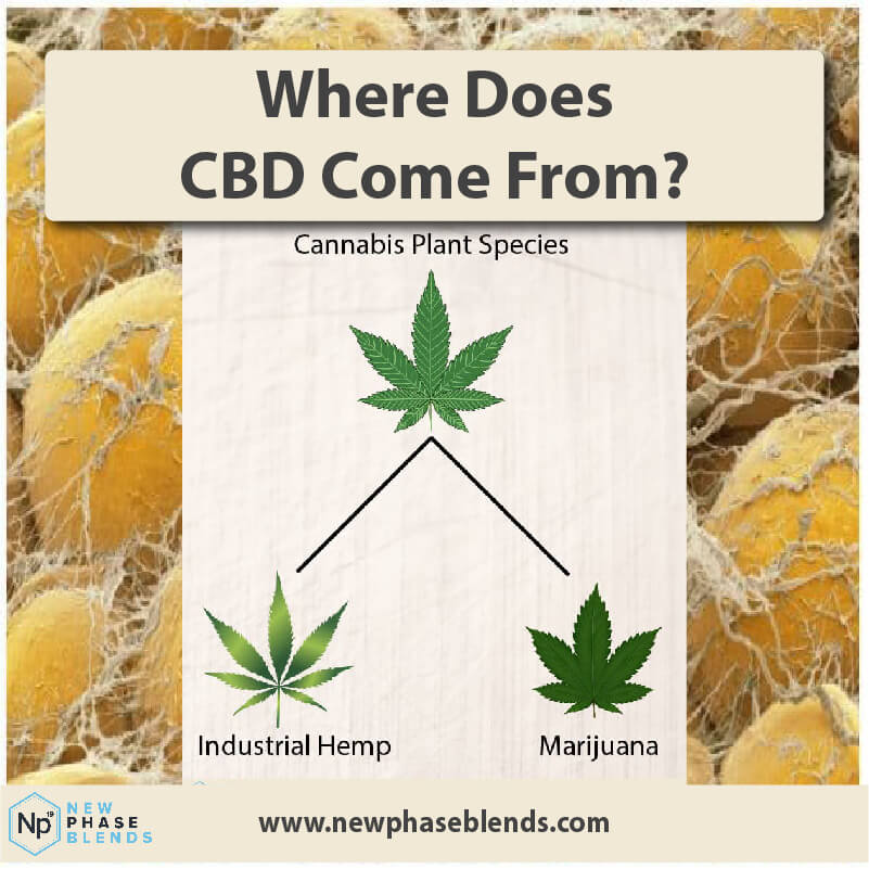 Where Does Cbd Come From Thumbnail