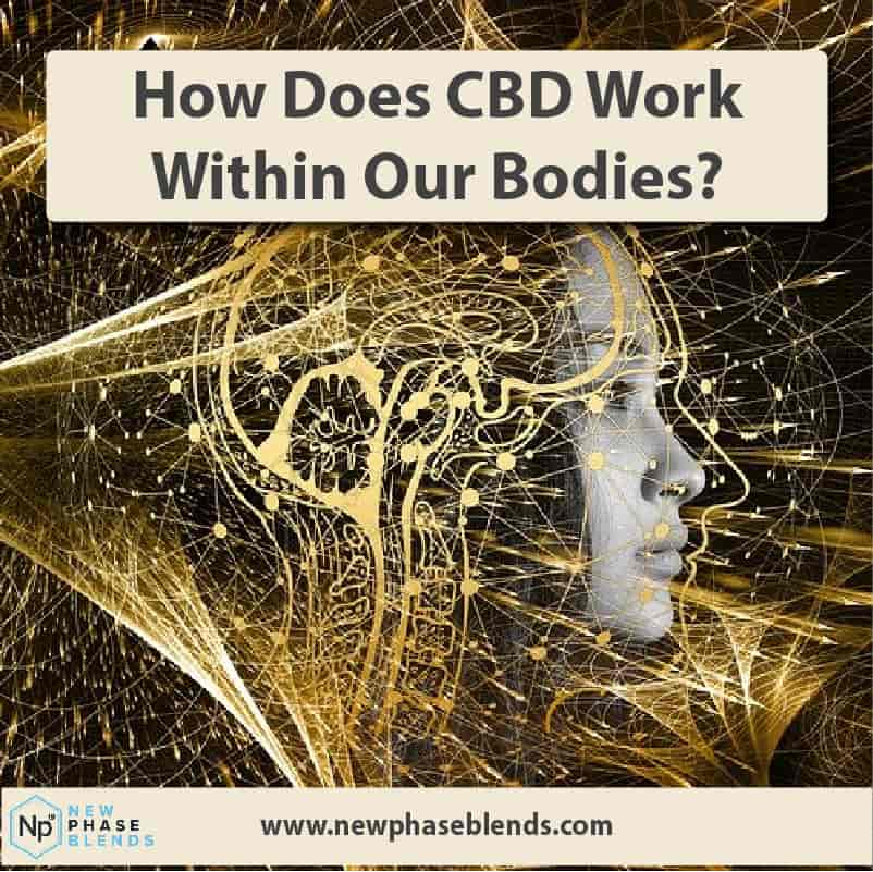 How Does Cbd Work Thumbnail