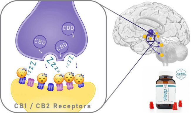 Brain Receptors Image